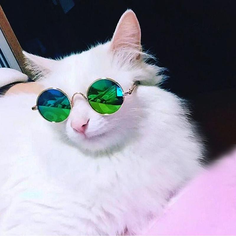 Как сделать очки коту